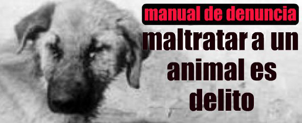 maltrato-animal-manual-denuncia